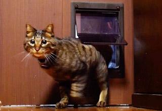 ペット用ルームドア「くぐりっこ」お客様の声 富山県 S邸