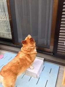 ペット網戸外観とE邸わんちゃん